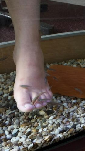 Fischen knabbern an Fuß im FishSpa Wesel