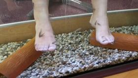 Fische knabbern an Füßen
